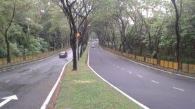 Natürlich Straßengefühlsmoment in die Bäume Lizenzfreies Stockfoto
