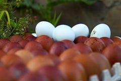 Natürliche ökologische Eier der braunen und blauen Farbe Lizenzfreie Stockbilder