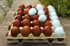 Natürliche ökologische Eier der braunen und blauen Farbe Stockfotografie