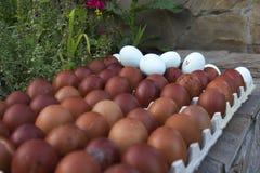 Natürliche ökologische Eier der braunen und blauen Farbe Lizenzfreies Stockfoto