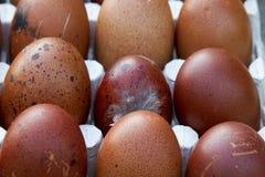 Natürliche ökologische Eier der braunen und blauen Farbe Stockfotos