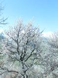 Natürliche Ansicht des Winters von eisigen Bäumen des Winters stockfoto