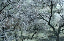 Natürliche Ansicht des Winters von eisigen Bäumen des Winters stockbilder