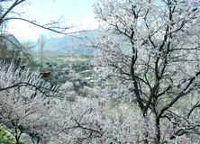 Natürliche Ansicht des Winters von eisigen Bäumen des Winters lizenzfreie stockfotos
