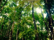 natürliche Bäume Lizenzfreie Stockfotos