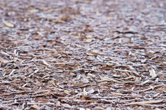 Natürliche Barke abgedeckt durch Morgenfrost Lizenzfreie Stockfotos