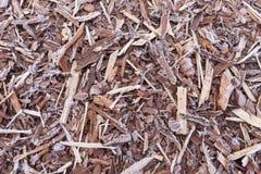 Natürliche Barke abgedeckt durch Morgenfrost Stockfotos
