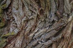 Natürliche Baumbeschaffenheit, alte Baumrindenahaufnahme Lizenzfreies Stockfoto