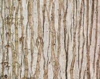 Natürliche Baumbeschaffenheit der Palme Lizenzfreies Stockbild