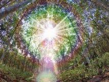 Natürliche Baumlandschaft Stockbilder