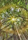Natürliche Baumlandschaft Stockbild