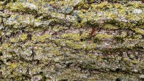 Natürliche Baumrindebeschaffenheit stockfotos