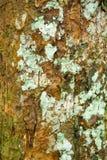 Natürliche Beschaffenheit des Baums im Wald Lizenzfreie Stockbilder