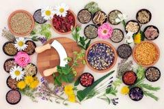 Natürliche Blume und Herb Medicine lizenzfreie stockbilder