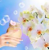 Natürliche Blumen-Creme Stockfotos
