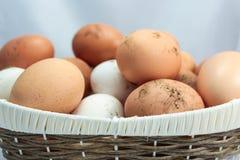 Natürliche Eier lizenzfreie stockfotos