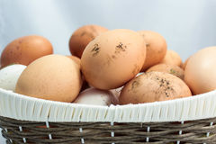 Natürliche Eier Lizenzfreie Stockbilder