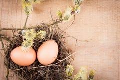 Natürliche Eier Stockfotos