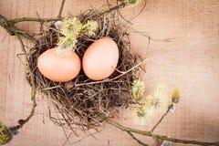 Natürliche Eier Stockfoto