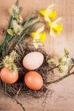 Natürliche Eier Lizenzfreie Stockfotografie