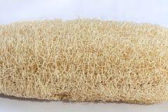 Natürliche Faser vom Luffaschwamm Cylindrica Stockfotos