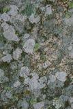 Natürliche Flechte und Mooshintergrund und -beschaffenheit Alte graue Wand bedeckt mit Flechte und Moos Organische Beschaffenheit Stockbild