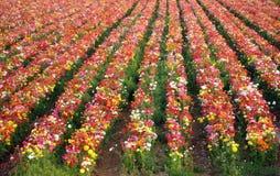 Natürliche frische Blumen Stockfoto