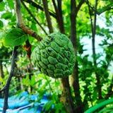Natürliche Fruchtphotographie Lizenzfreies Stockfoto