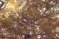 Natürliche grüne Waldbaumaste mit Sonnenlicht stockfotografie