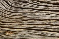 Natürliche Muster und Beschaffenheit eines alten Baums Stockfoto