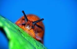 Natürliche Orange Stockbild