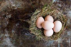 Natürliche Ostereier in Vögel nisten, glücklicher Ostern-Konzepthintergrund Stockfotografie