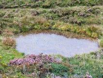 Natürliche Regenpfütze im Wald Lizenzfreies Stockfoto