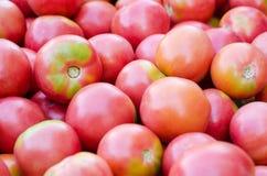 Natürliche rote Tomaten Die Ansicht von der Oberseite Beschaffenheit Hintergrund stockfotos
