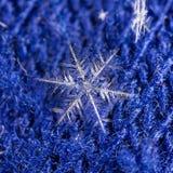 Natürliche Schneeflocken auf Pelz Stockbild