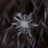 Natürliche Schneeflocken auf Pelz Lizenzfreie Stockfotografie