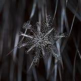 Natürliche Schneeflocken auf Pelz Lizenzfreies Stockfoto