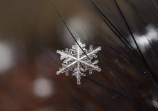 Natürliche Schneeflocken auf Pelz Stockfotografie