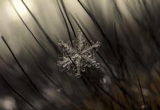 Natürliche Schneeflocken auf Pelz Stockfotos