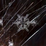 Natürliche Schneeflocken auf Pelz Lizenzfreies Stockbild