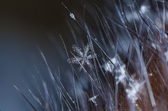 Natürliche Schneeflocken auf Pelz Stockbilder