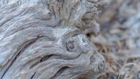 Natürliche Skulptur Stockbild
