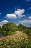 Natürliche Sommerlandschaft Stockbilder