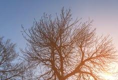 Natürliche Sonne mit großem Baumasthintergrund Stockbilder