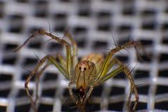Natürliche Spinne im Haus in Ayutthaya Stockfotos