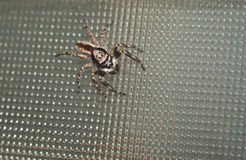 Natürliche Spinne im Haus in Ayutthaya Lizenzfreie Stockfotos