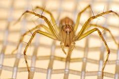 Natürliche Spinne im Haus in Ayutthaya Stockfoto