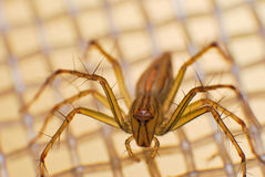 Natürliche Spinne im Haus in Ayutthaya Stockfotografie