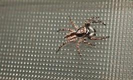 Natürliche Spinne im Haus in Ayutthaya Lizenzfreie Stockbilder