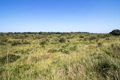 Natürliche Sumpfgebiet-Vegetation am iSimangaliso Sumpfgebiet-Park im Zulu lizenzfreies stockbild